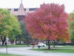 Barvy podzimu - campus